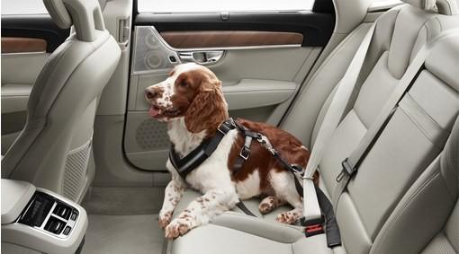 Volvo Hundegeschirr / Hundegurt